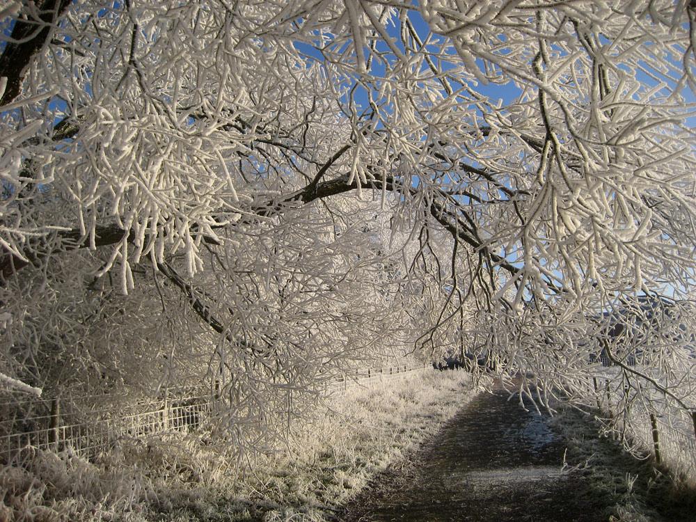 """фото """"Frost"""" метки: природа, frost, вода"""