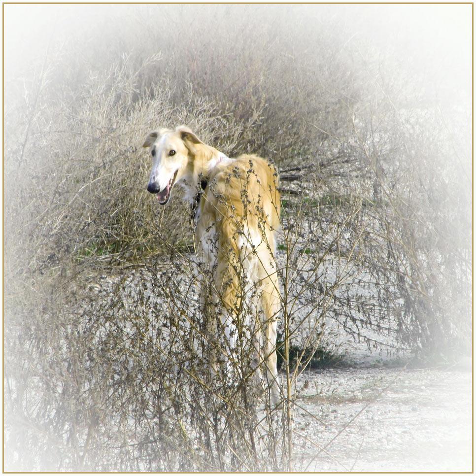 """фото """"""""Ёжик"""" в тумане..."""" метки: разное, туман собака"""