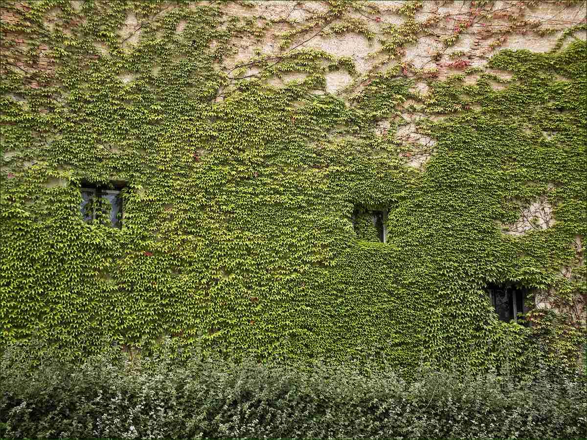"фото ""Windows"" метки: фрагмент, путешествия, Lower Belvedere, Вена, Нижний Бельведер"