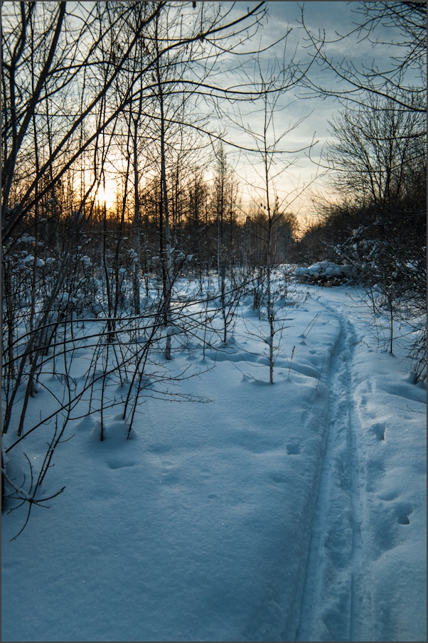 "photo ""***"" tags: landscape, forest, sunset, winter"