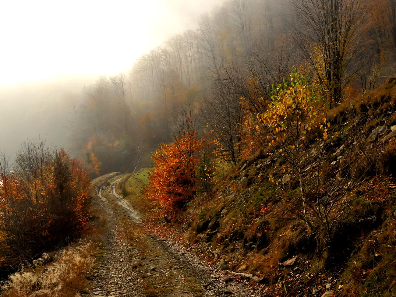 "фото ""***"" метки: пейзаж, путешествия, панорама, горы, лес, осень"
