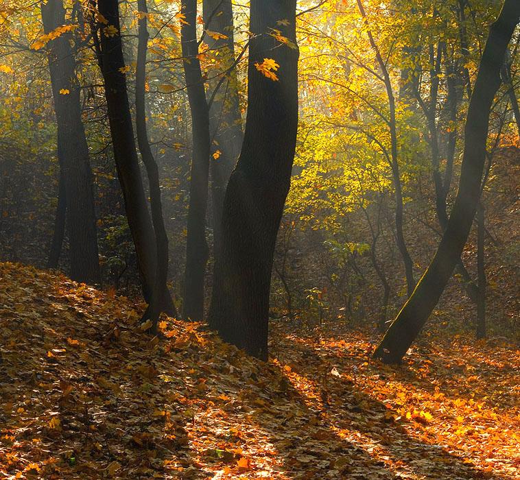 "фото ""Осенний квадрат"" метки: природа,"