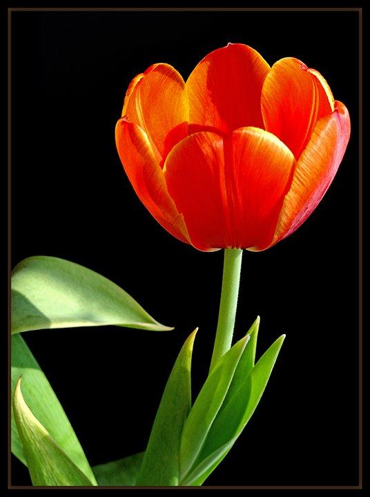 """фото """"Happy Birthday, Svetlana!"""" метки: природа, цветы"""