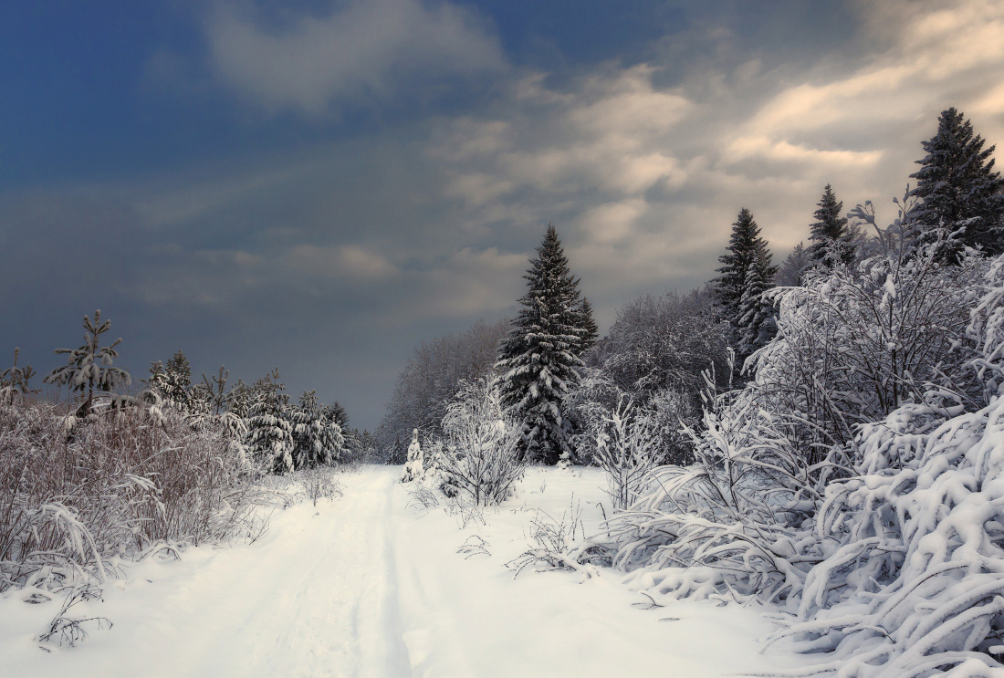 "photo ""***"" tags: landscape, forest, sky, snow, winter, Тропинка, елки, сугробы, тучи"