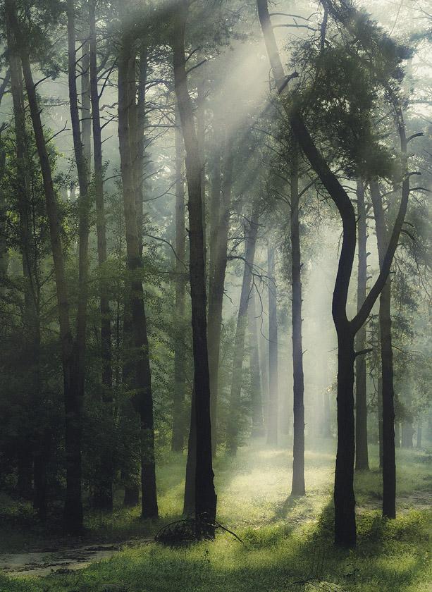 """фото """"С добрым утром"""" метки: природа,"""