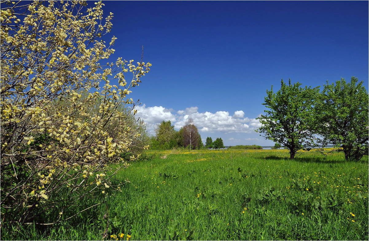 "photo ""***"" tags: landscape, birches, flowers, grass, spring"