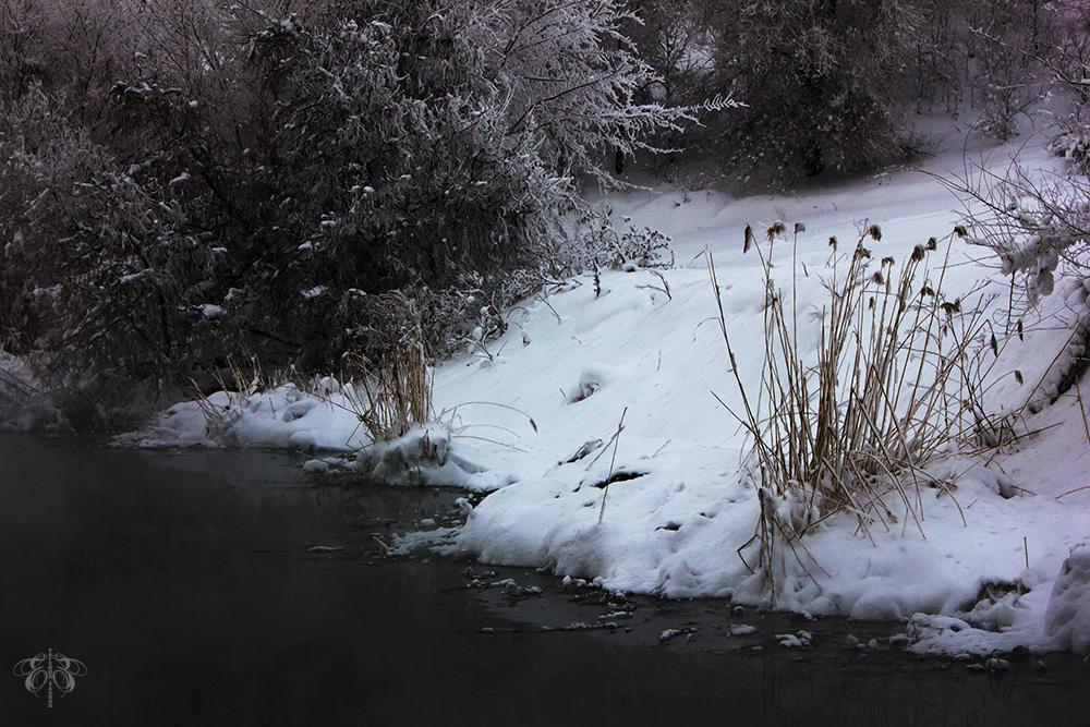 "фото ""***"" метки: природа, деревья, зима, камыш, река, снег"