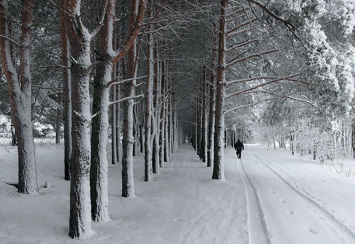 """фото """"После метели"""" метки: пейзаж, зима, лес, снег, сосны"""