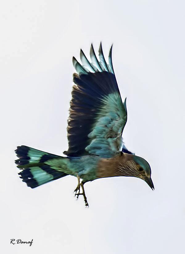 "фото ""Blue bird"" метки: природа,"