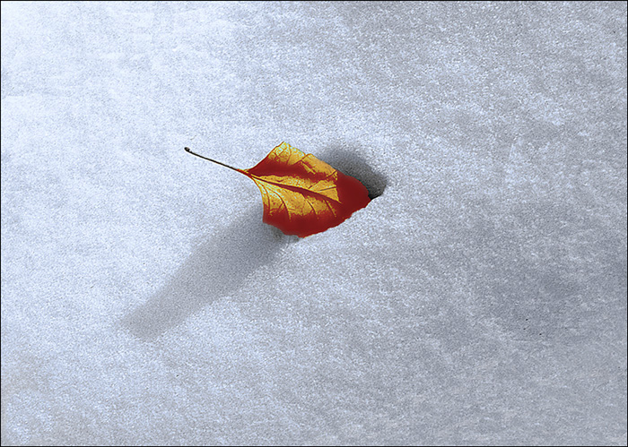 "photo ""***"" tags: nature, leaf, shadow, snow"