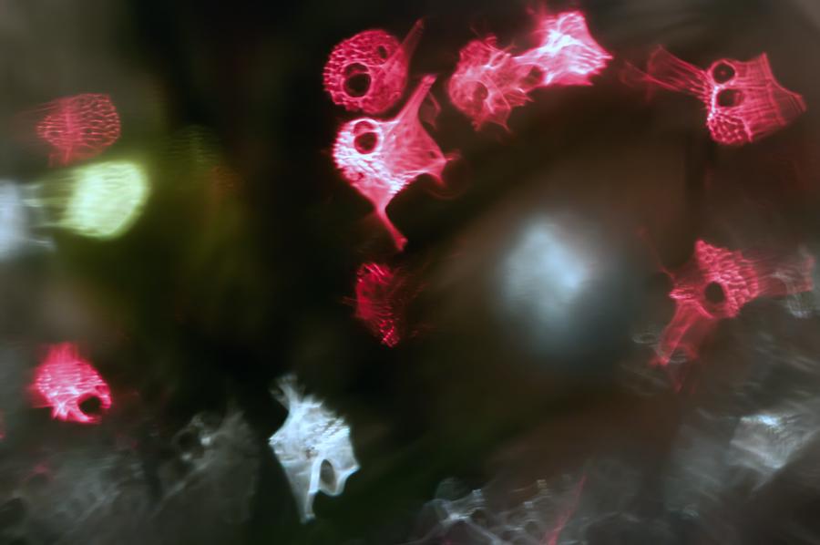 """фото """"Напиться до .... вот этих"""" метки: фрагмент, Европа, Литва, Новый Год, беззакуски, водка, гдеугодно, зима, суперверинайс, тошниловка, ёлка"""