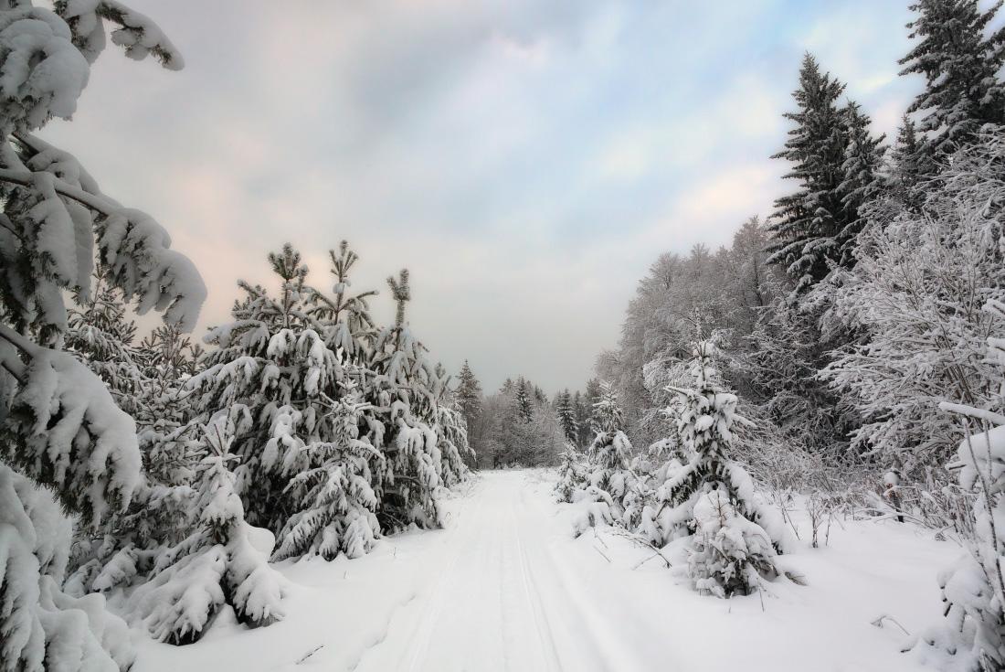 "photo ""***"" tags: landscape, forest, sky, snow, winter, Тропинка, елки, краски, сугробы, шапки"