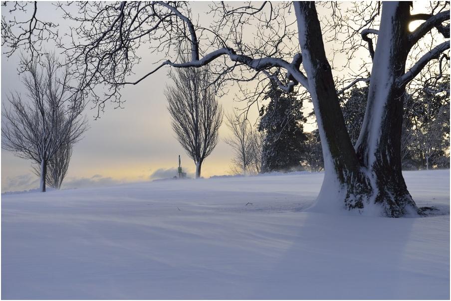 "фото ""поземка"" метки: пейзаж, зима, рассвет"