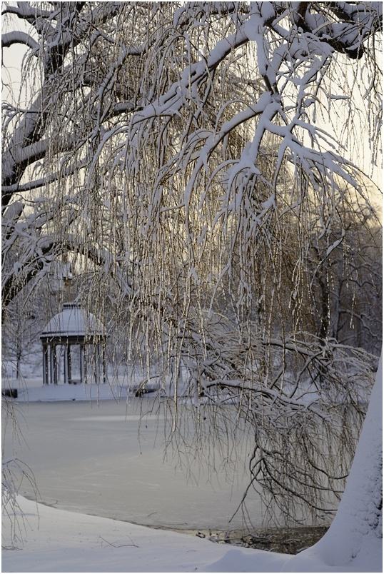 """фото """"***"""" метки: пейзаж, зима, рассвет"""
