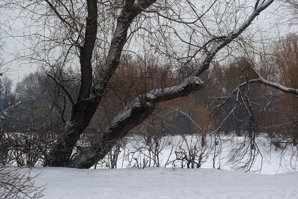 "фото ""Зимние краски."" метки: пейзаж, природа,"