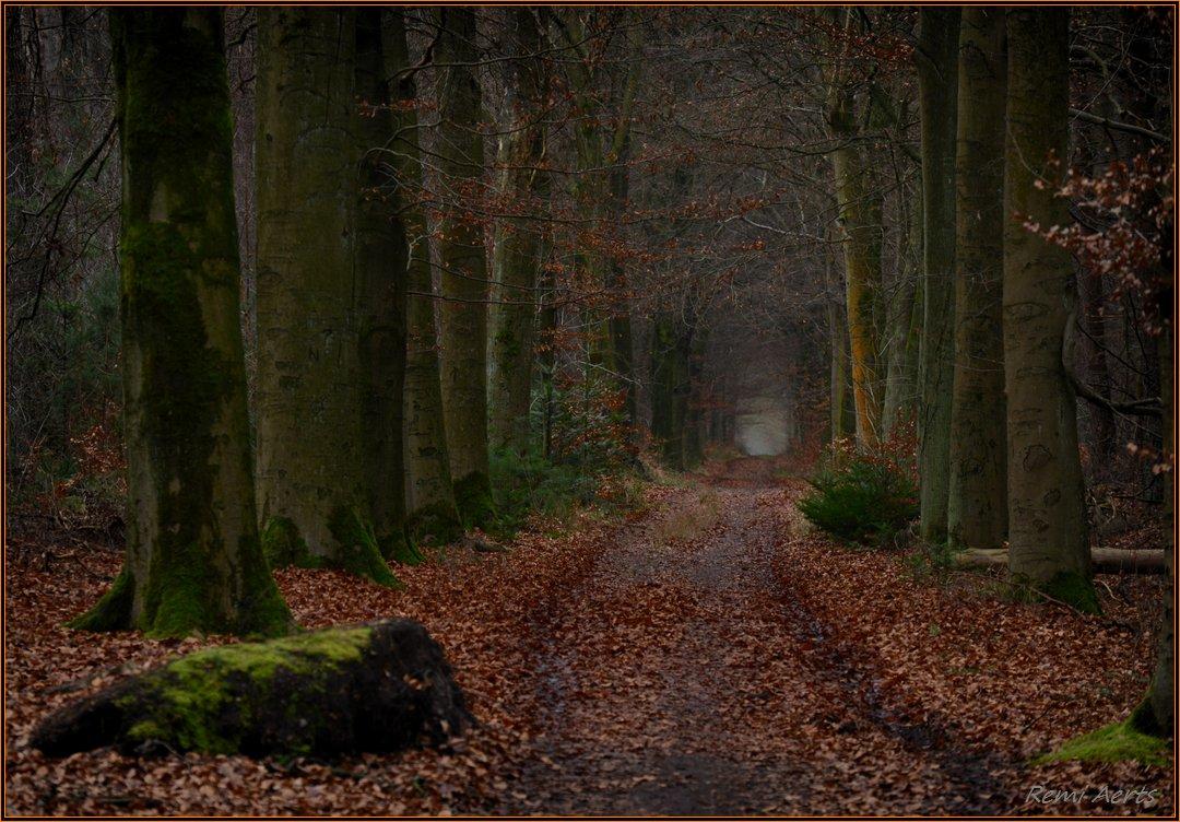 """фото """"dark road"""" метки: пейзаж, природа,"""
