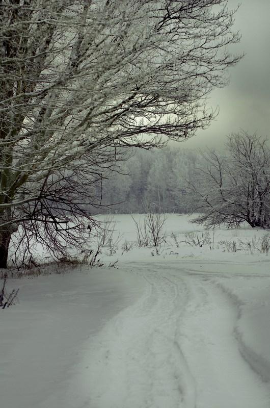 "фото ""лесом полем лесом"" метки: пейзаж, природа, зима снег"