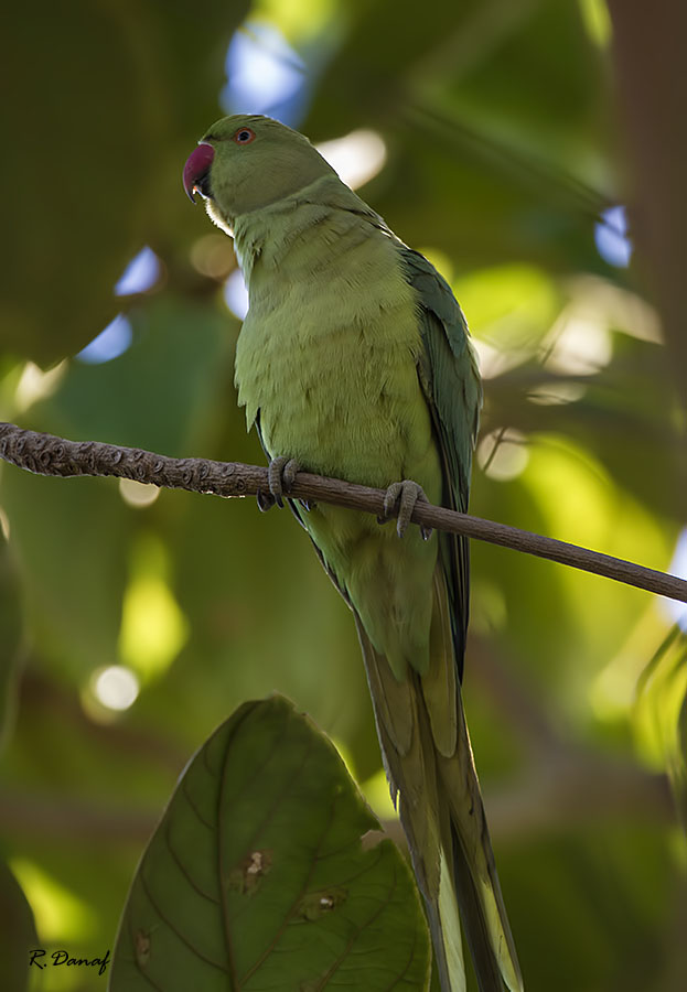 "photo ""The parrot"" tags: nature, bird"