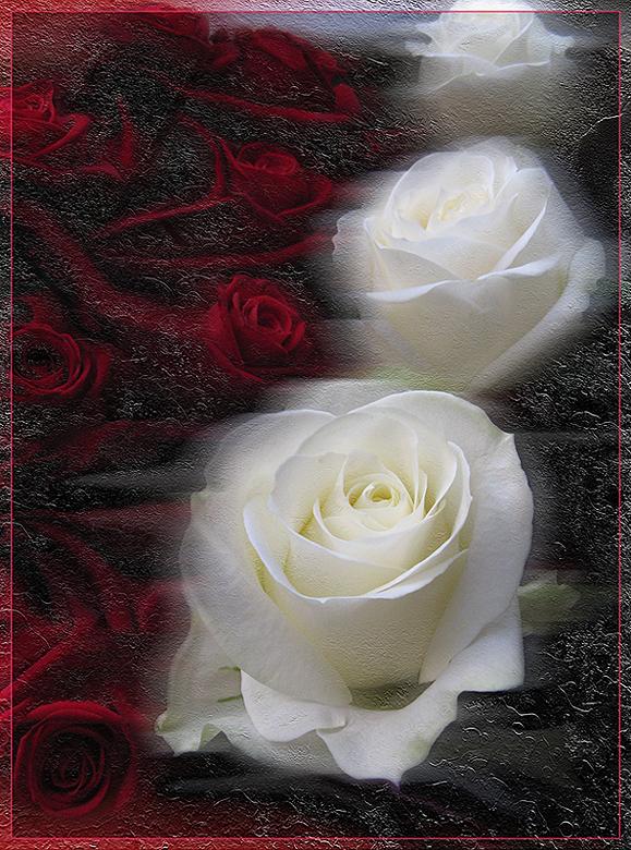 """фото """"Рождественские розы"""" метки: природа, digital art, Новый Год, рождество, розы, цветы"""