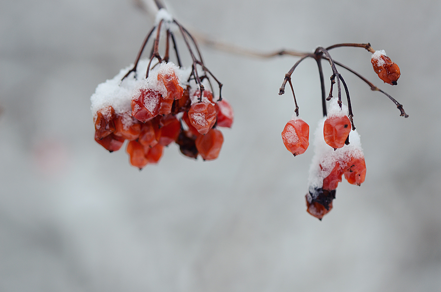 "photo ""***"" tags: macro and close-up, Europe, winter"