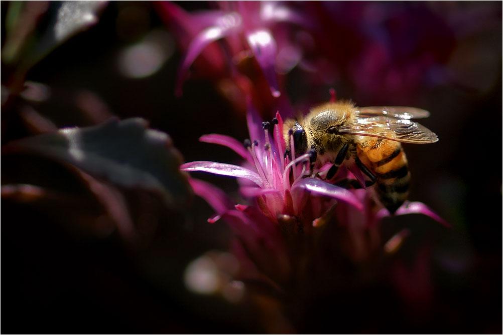 """фото """"Пчела вела себя игриво, потом был страстный поцелуй.."""" метки: природа,"""