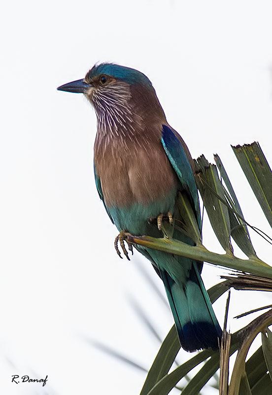 "фото ""***"" метки: природа, птица"