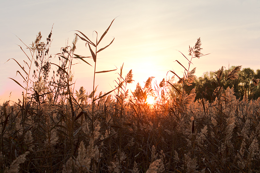 "фото ""Закатилось солнце в камыши"" метки: пейзаж, Запорожье, Украина, закат, камыши, октябрь, солнце"