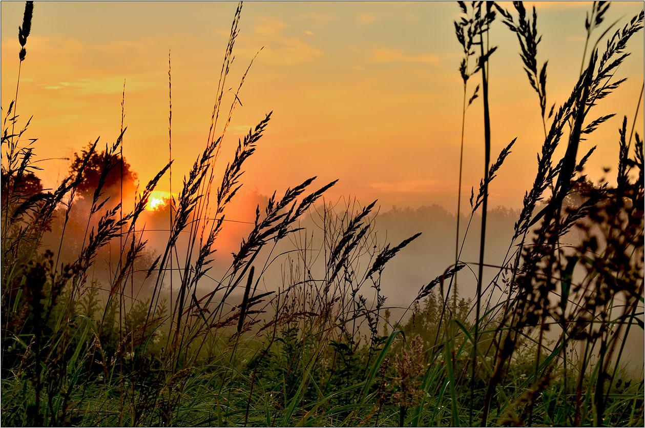"фото ""***"" метки: пейзаж, Восход, лето, луг, облака, роса, солнце, травы, туман, утро"