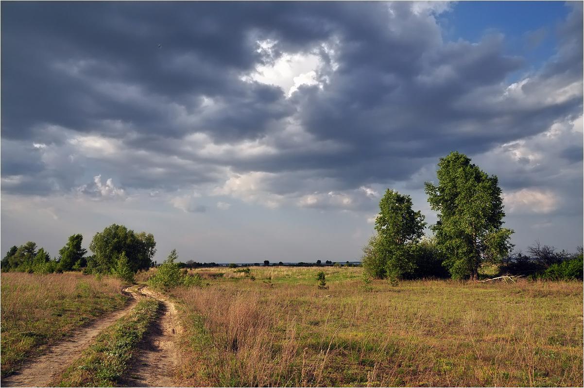 """фото """"Под вечер"""" метки: пейзаж, березы, лето, облака, трава"""