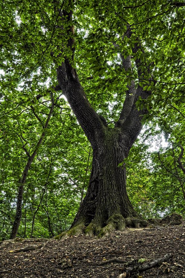 """фото """"древо"""" метки: природа,"""