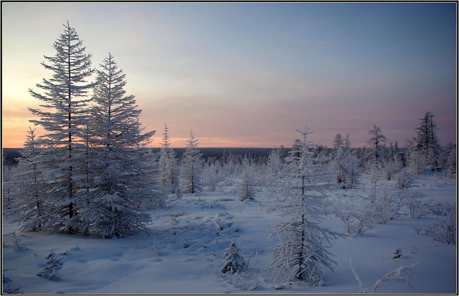 """фото """"Зимнее утро"""" метки: пейзаж, рассвет зима тайга"""