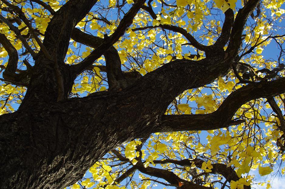 """фото """"Жълто-черно"""" метки: природа, абстракция,"""