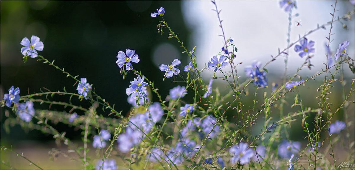 """фото """"""""В голубых платочках милые девчонки на полянке летней хохотали звонко."""""""" метки: природа,"""