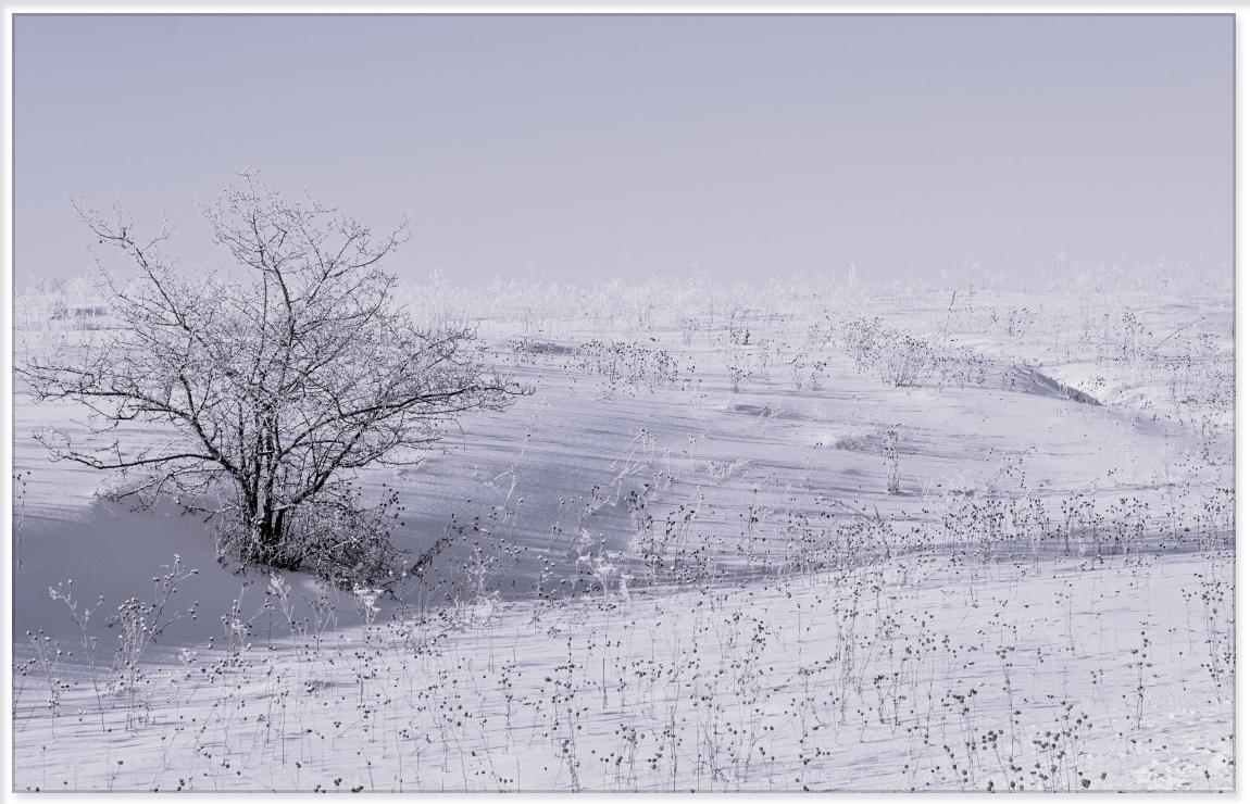 """фото """"Не щадит зима Сибирская..."""" метки: пейзаж, природа,"""