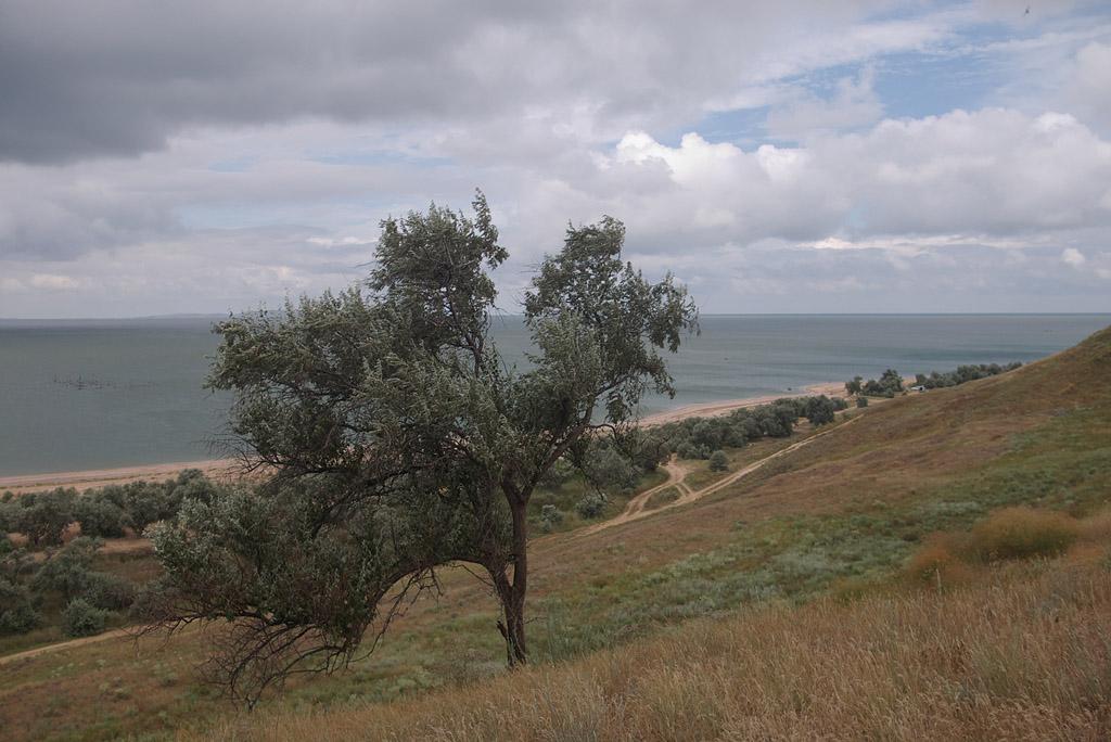 """фото """"Дерево на склоне."""" метки: пейзаж,"""
