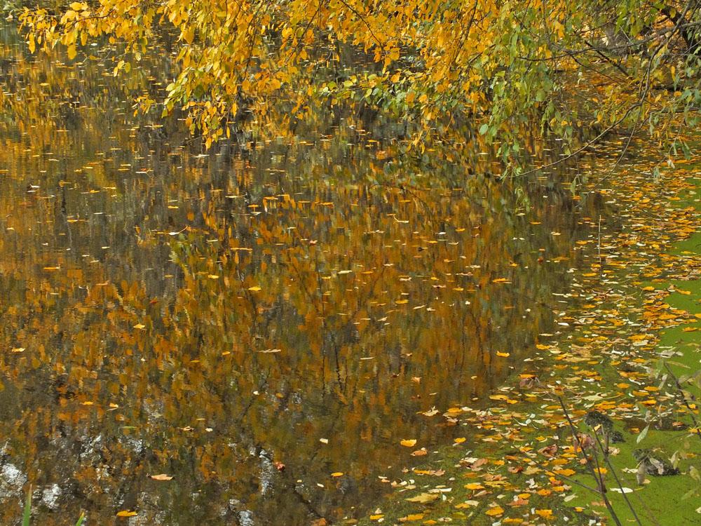 """фото """"Импрессия осени"""" метки: пейзаж, вода, золотая осень, импрессионизм, листва, октябрь, осень, пруд"""
