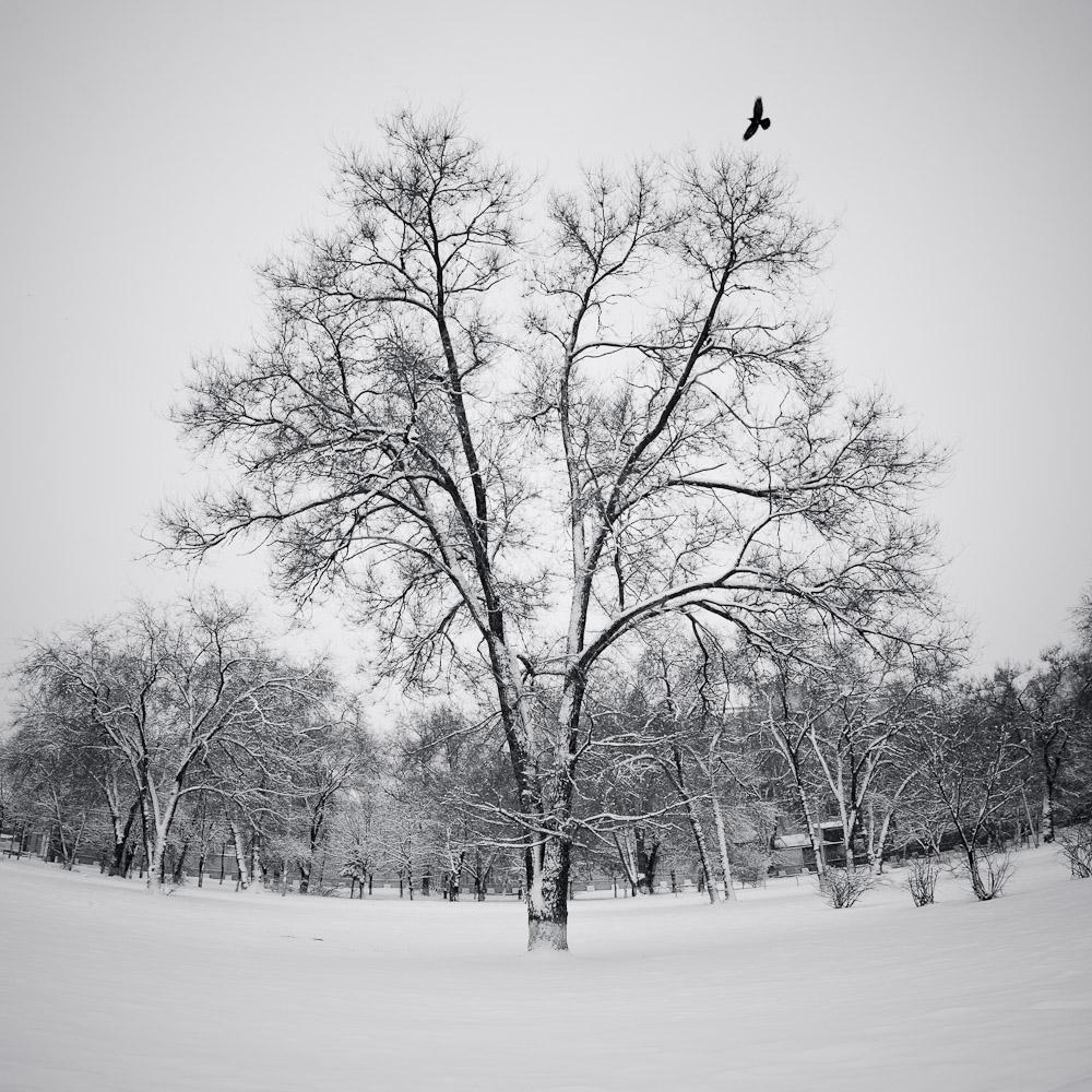 """фото """"Дерево"""" метки: пейзаж, природа, панорама, дерево, зима, птица"""