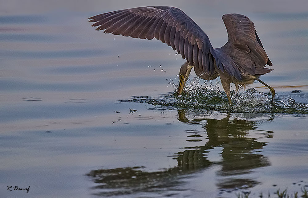 "photo ""Fishing"" tags: nature, bird"