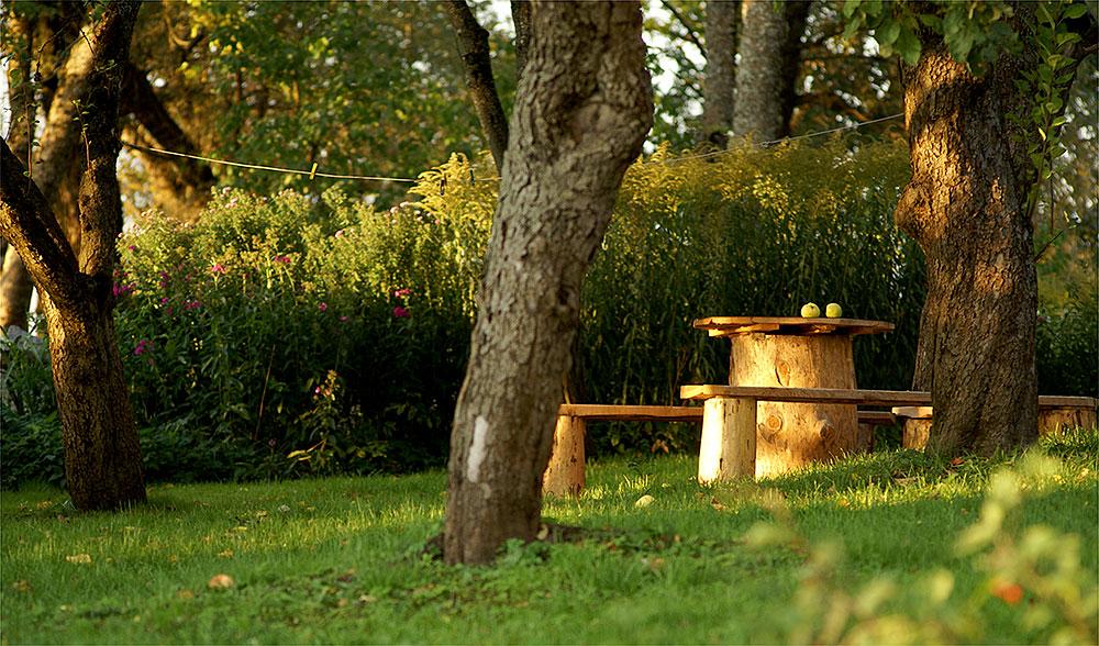 "photo ""Летний вечер в деревне"" tags: landscape, nature, still life, summer, деревня, яблоки"
