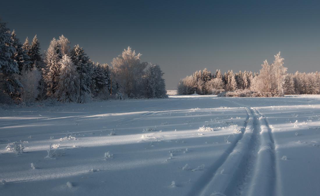 """photo """"***"""" tags: landscape, field, forest, hoarfrost, snow, winter, деревья, колеи, мороз"""