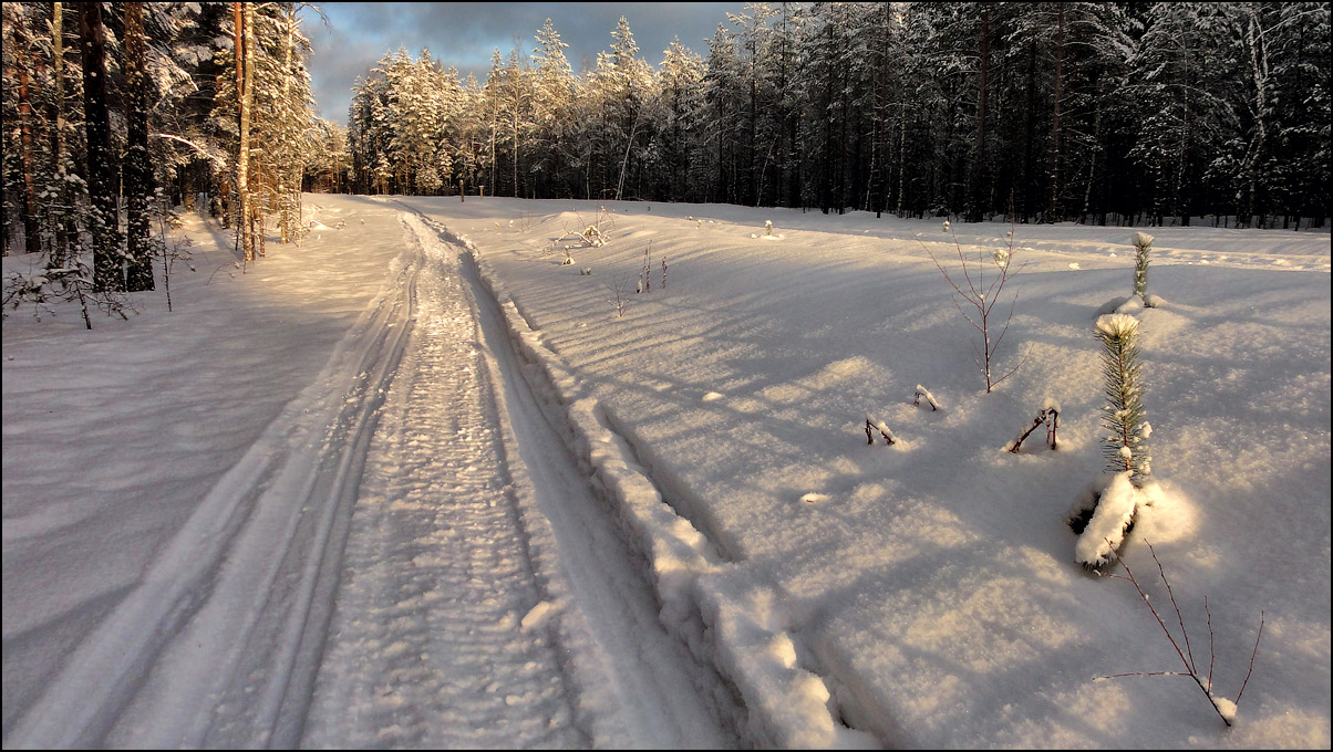 """фото """"Последние шаги в гору"""" метки: пейзаж, дорога, зима, красиво, солнце, сосны"""