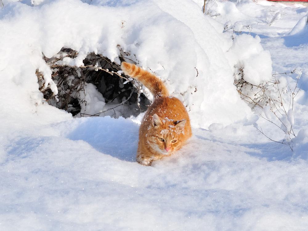 """фото """"на охоте"""" метки: разное, кот"""