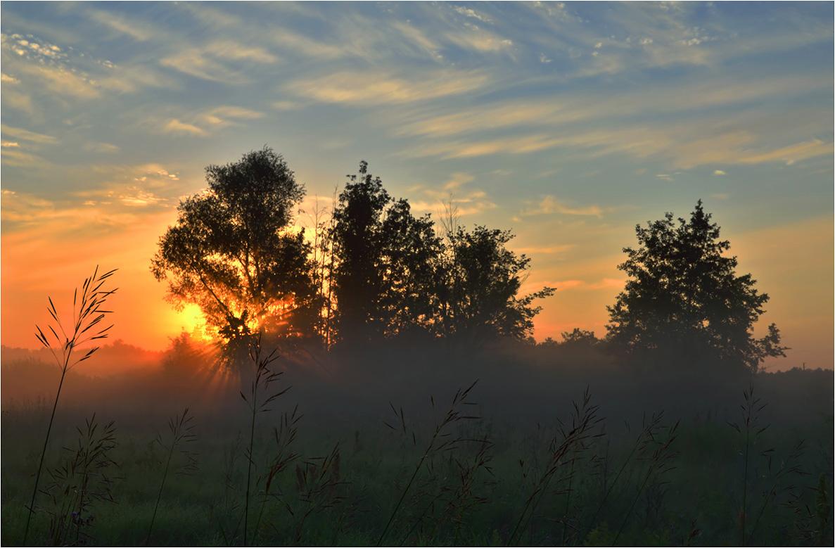 "фото ""Первые лучи"" метки: пейзаж, Восход, деревья, лето, луг, лучи, небо, облака, солнце, травы, туман, утро"