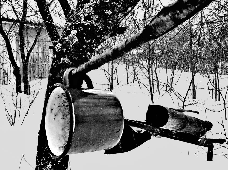"фото ""Графика зимы."" метки: жанр,"