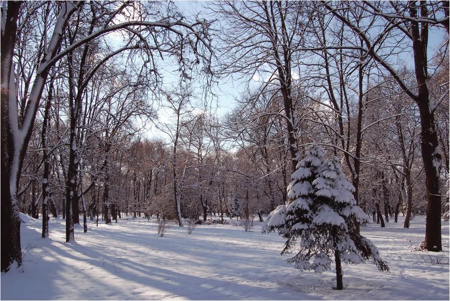 "фото ""После  январского  снегопада..."" метки: пейзаж,"