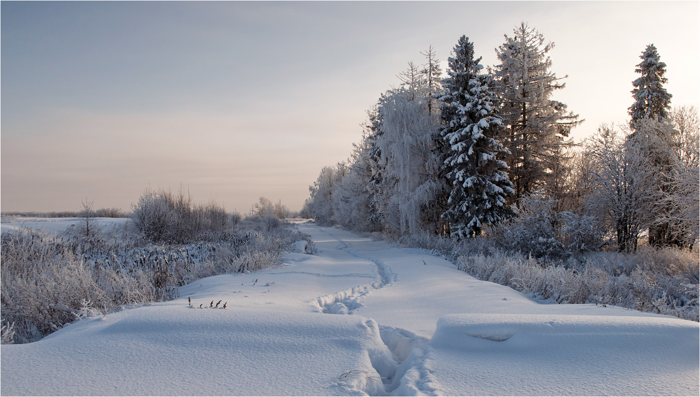 "photo ""***"" tags: landscape, birches, forest, hoarfrost, snow, sunset, winter, ели, тени"