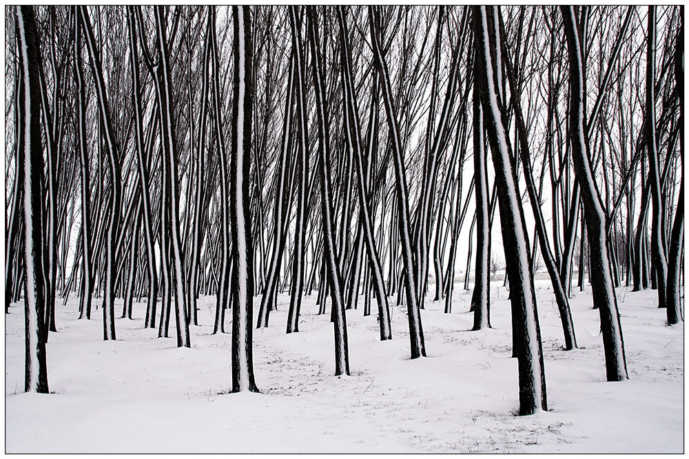 "photo ""***"" tags: landscape, nature, black&white, forest, romania, snow, trees, white, winter"
