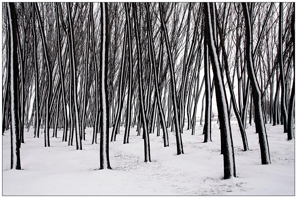 """фото """"***"""" метки: пейзаж, природа, черно-белые, forest, romania, trees, white, зима, снег"""