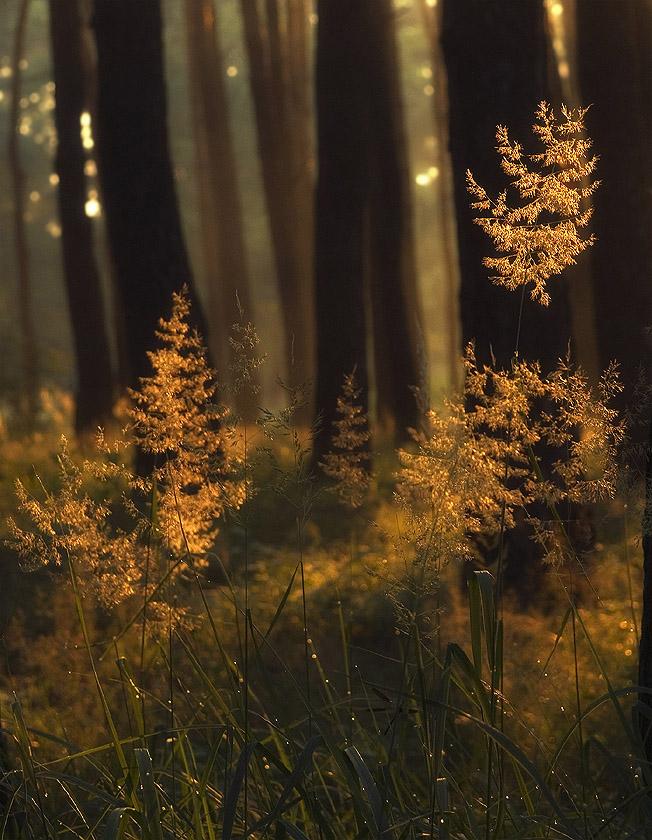 """фото """"Освещенные солнцем"""" метки: природа,"""