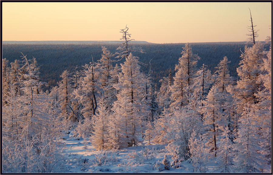 """фото """"Тихое утро"""" метки: пейзаж, тайга зима утро"""